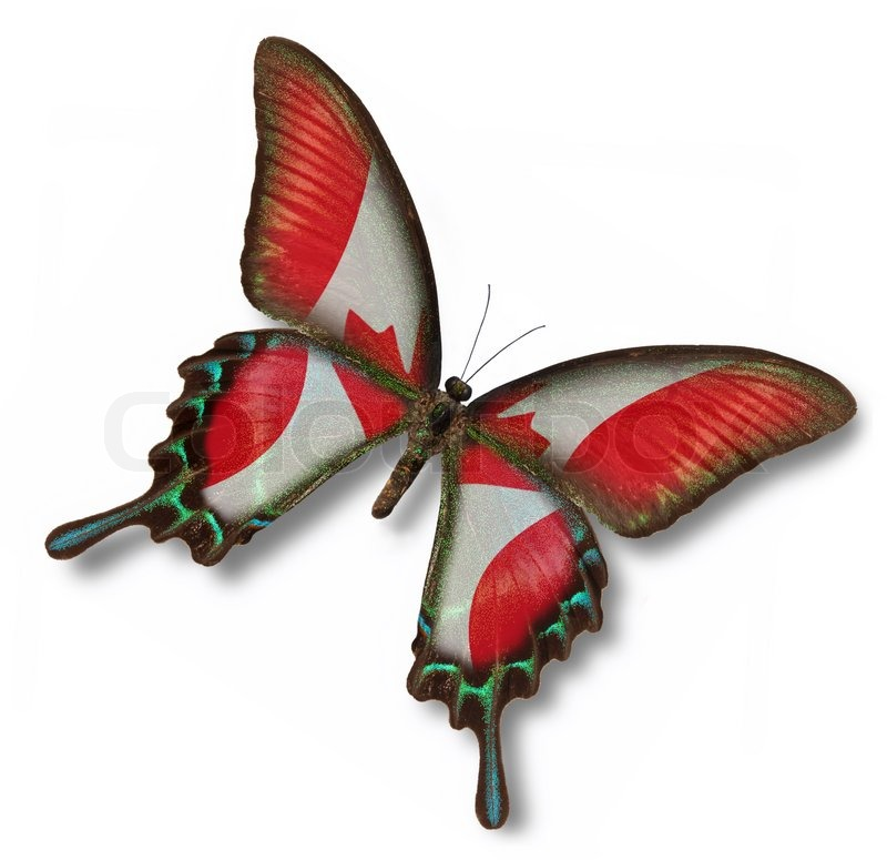 Stock image of 'Canada flag on butterfly'