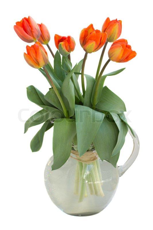 orange tulpen strauss in glasvase stockfoto colourbox. Black Bedroom Furniture Sets. Home Design Ideas