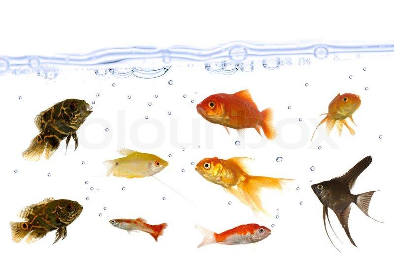 Best Fish Food For Marine Tank