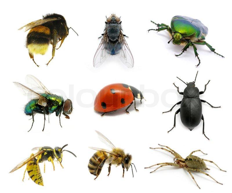 Satz von Insekten  Stockfoto  Colourbox