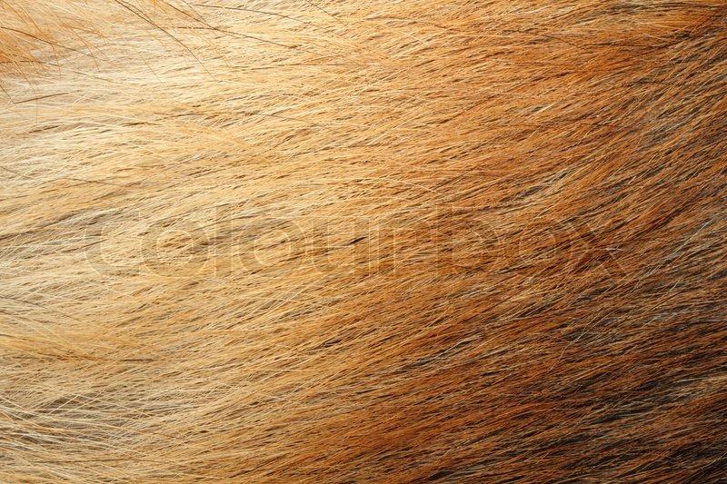Animal skin, stock photo