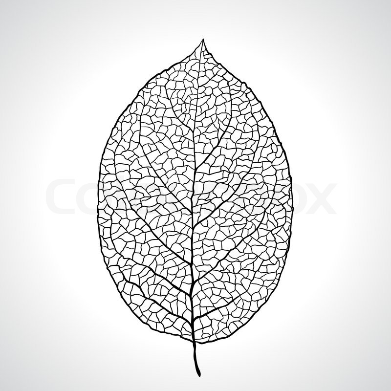 Black macro leaf natural isolated Vector illustration ...