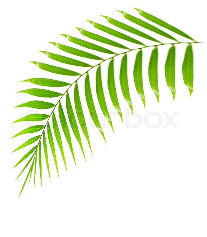 Free Coloring Pages Of Tropical Palm Leaf