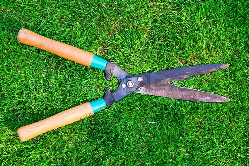 garden clippers lying on green grass stock photo colourbox