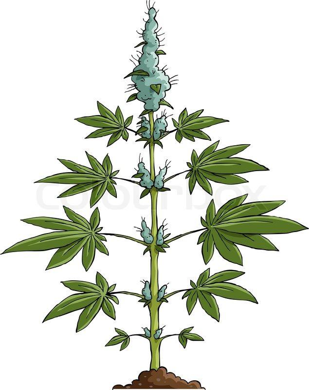 Marijuana leaf. Medical cannabis leaf isolated on white. Graphic ...