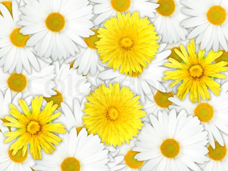 Background of yellow and white flowers stock photo colourbox mightylinksfo