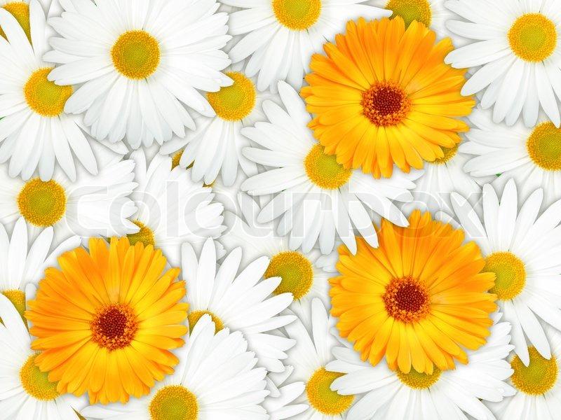 Background Of Orange And White Flowers Stock Photo