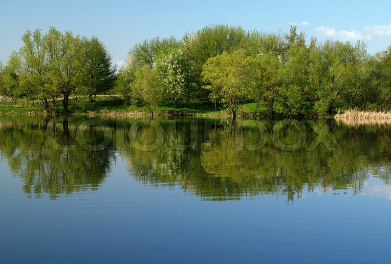 Calm River And Green Trees On The Banks Of The River