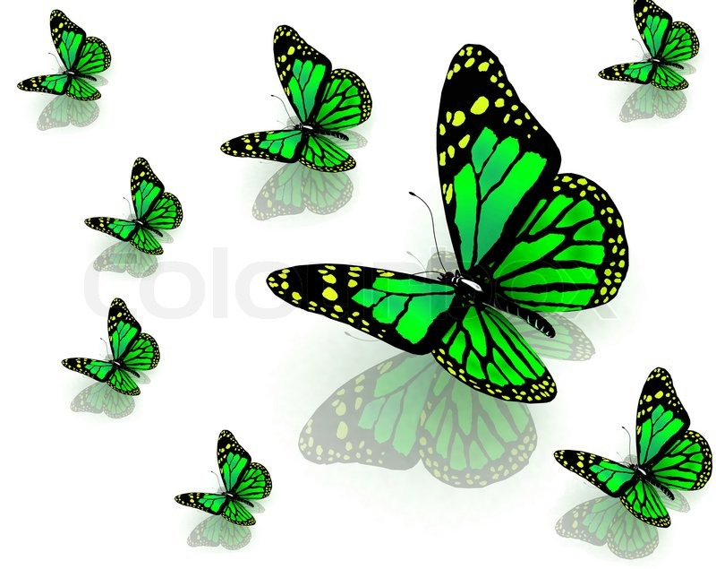 the butterflies of green color stock photo colourbox