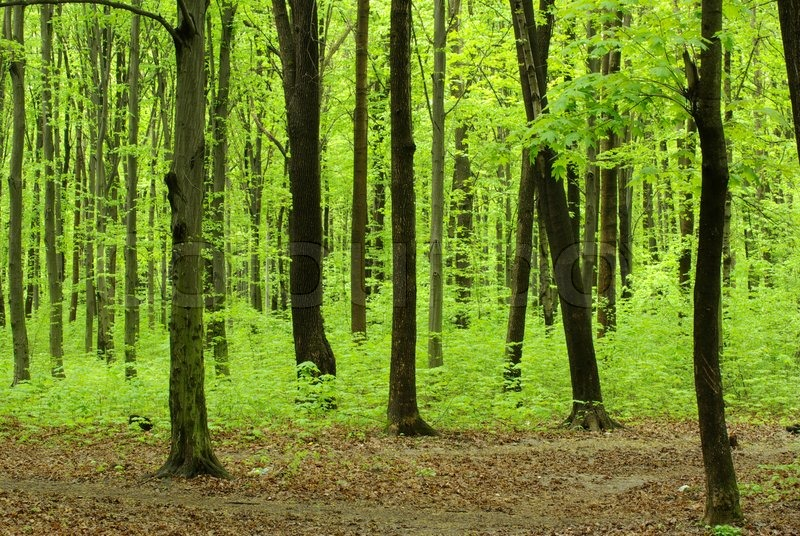 Green forest landscape in the morning | Stock Photo ...