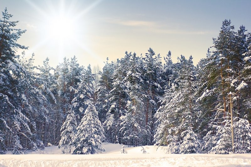 Beautiful Sunny Winter Landscape with Trees in Sunny Cold Day ...