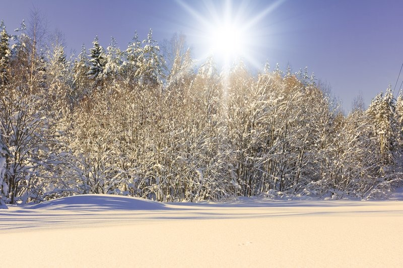 Free photo Snow Trees Cold Sunny Winter Ice Winter Day - Max Pixel