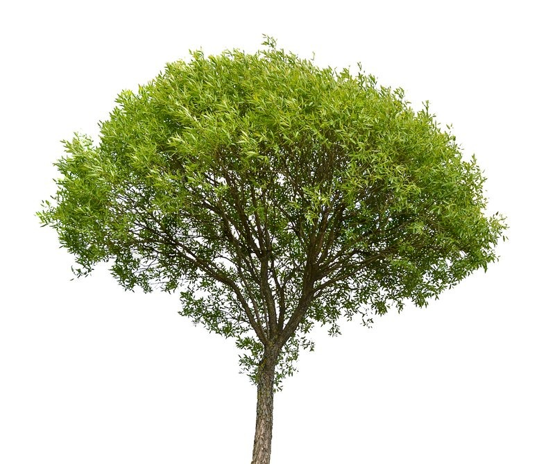 Green tree isolated on white background | Stock Photo | Colourbox: colourbox.com/image/green-tree-isolated-on-white-background-image...
