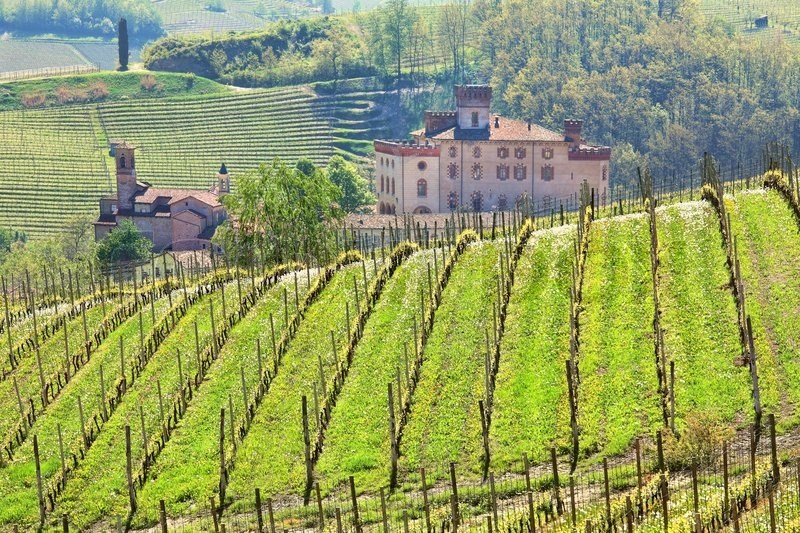 Vineyards and castle of Barolo at     | Stock image | Colourbox
