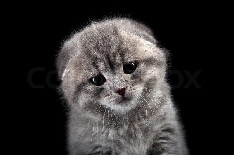 lonely sad cat - photo #23