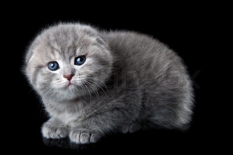 Supplier Cat Com