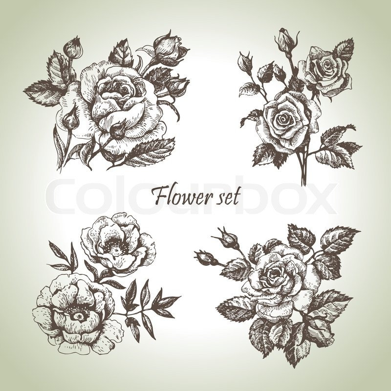 hand drawn rose set stock vector colourbox