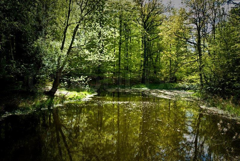 4015107 733079 springtime lake