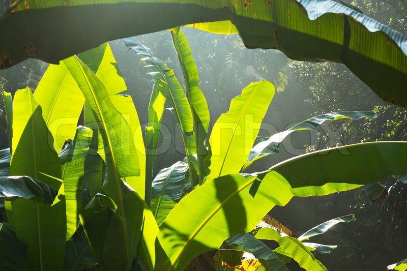 jungle stock photo colourbox