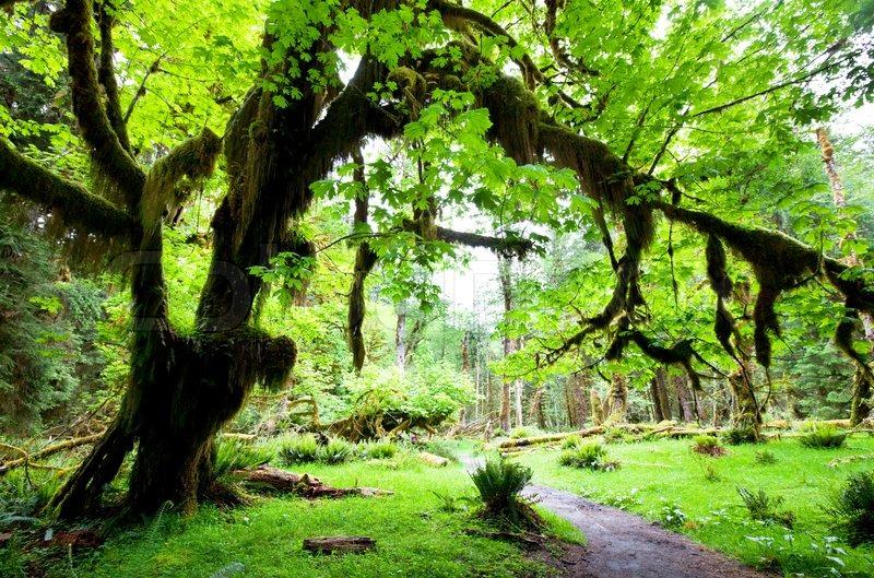 rain forest stock photo colourbox