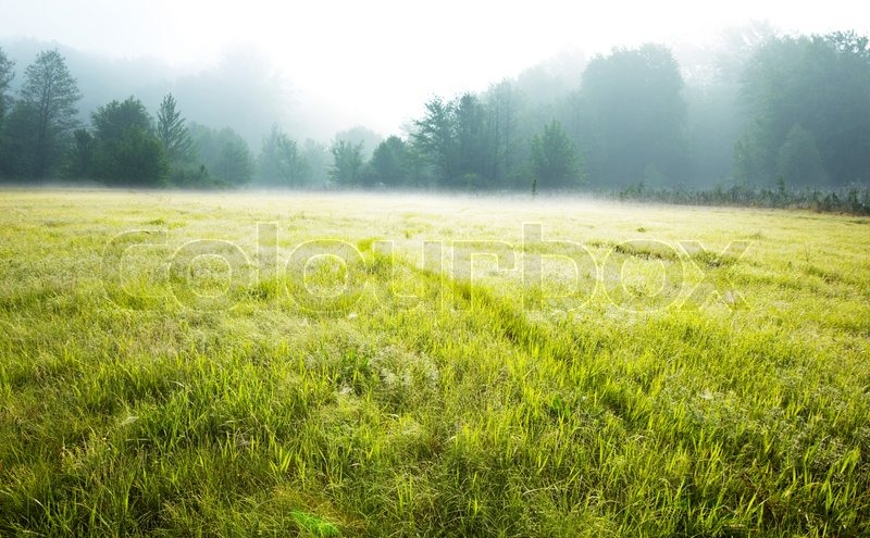Summer meadow, stock photo