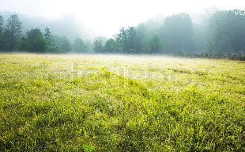 Summer meadow, stock photo