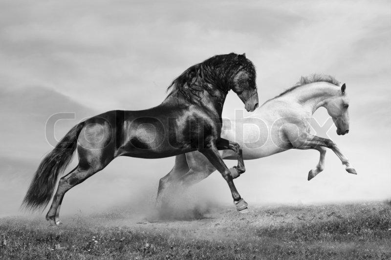 Horses run stock photo