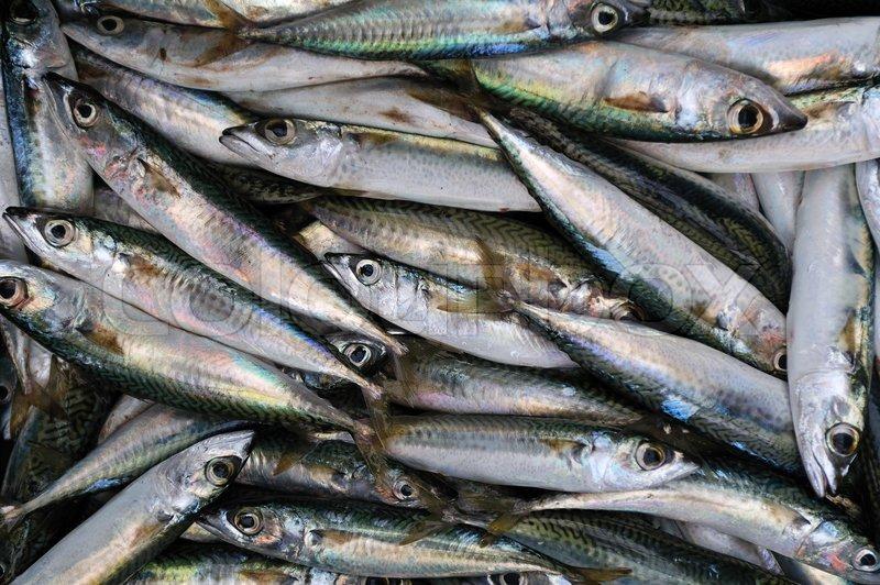 Fresh bluefin tuna fish background stock photo colourbox for Tuna fish price