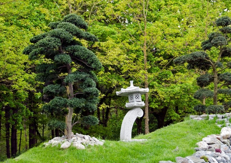 Bonsai trees in japanese garden stock photo colourbox for Small trees for japanese garden