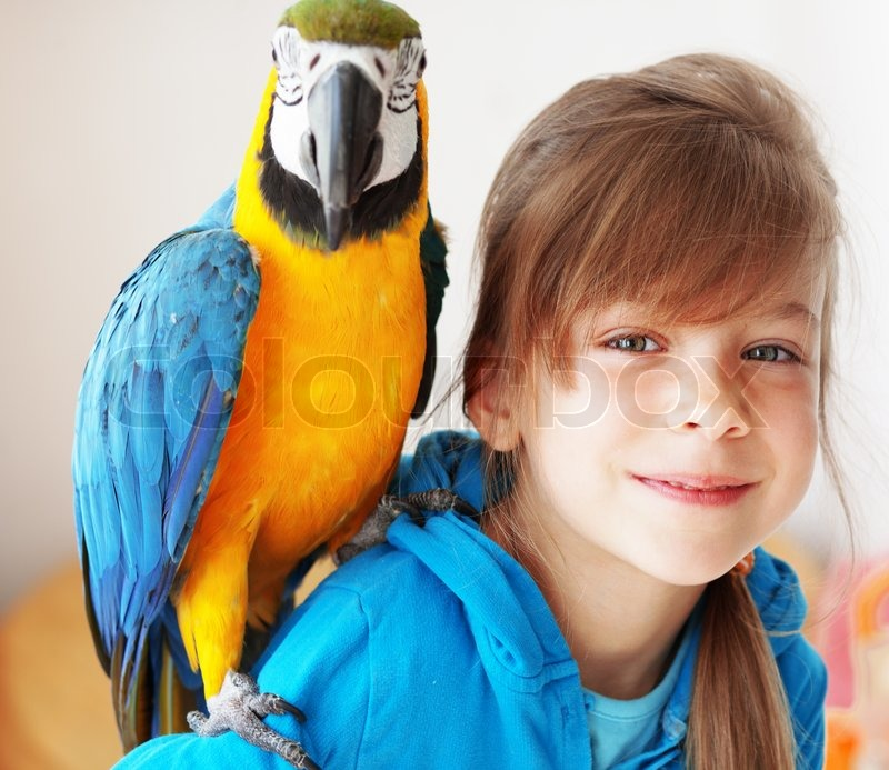 Child with ara parrot   Stock image   Colourbox