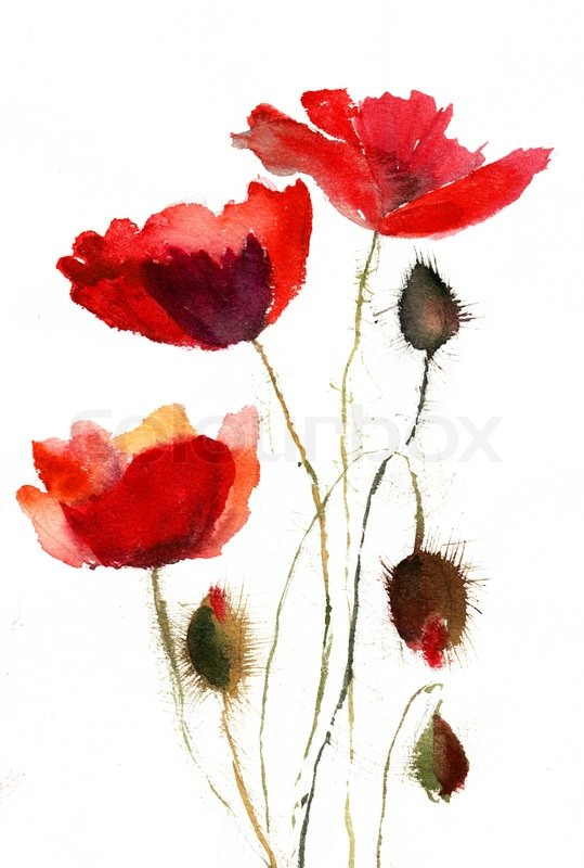 Red poppy flowers stock photo colourbox mightylinksfo