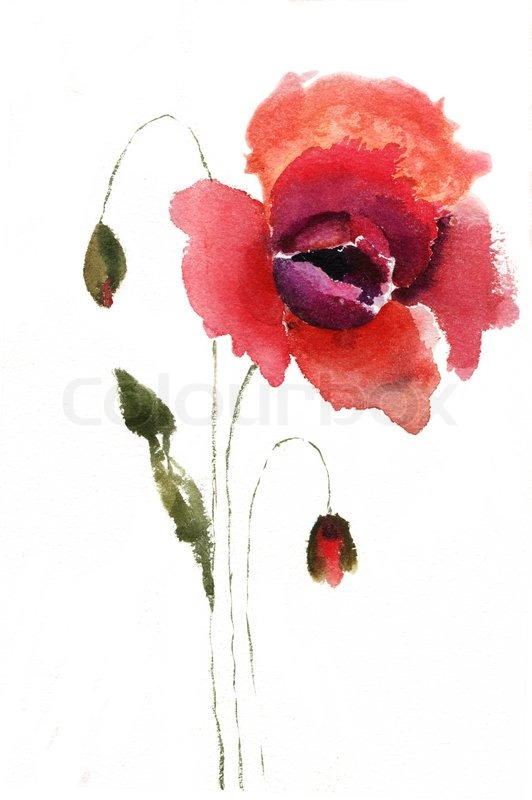 Watercolor illustration of red poppy flower stock photo colourbox mightylinksfo