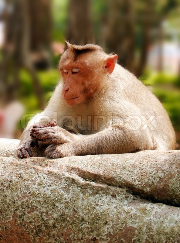 Der zuhält affe augen sich die Affe Augen