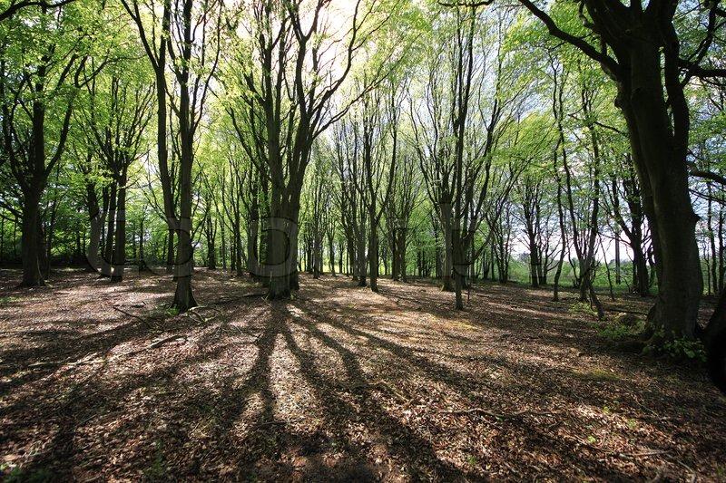 jobs land skov og havebrug danmark jobs
