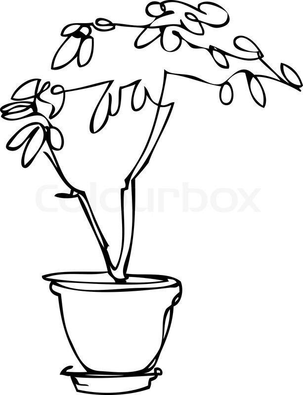 Passion Flower Line Drawing : Sketch room plant flower in a pot stock vector colourbox