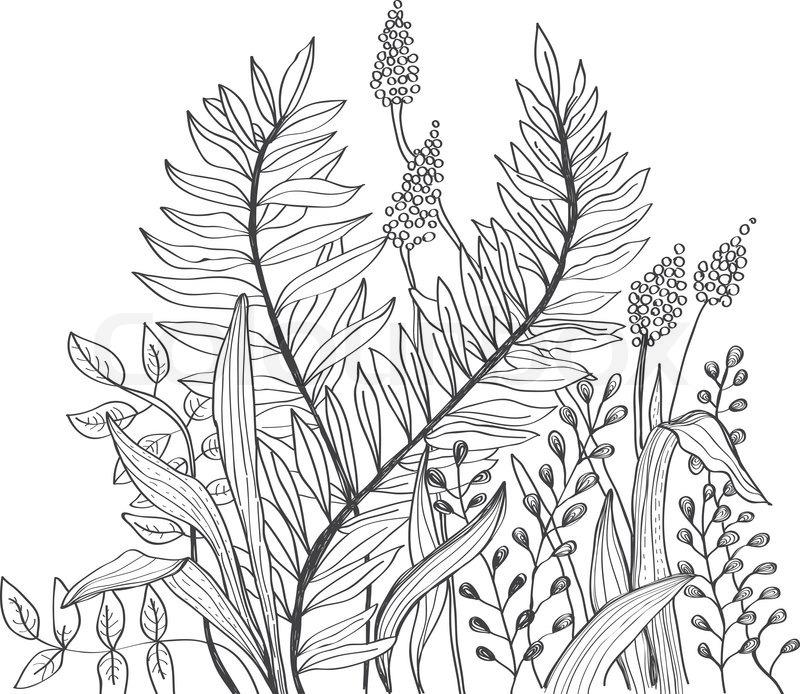 Line Art Design Background : Romantic doodle flower background stock photo colourbox