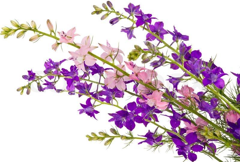persona 5 flower shop bouquet guide