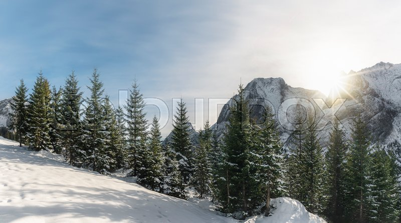 Sunny winter landscape with snow-capped ...