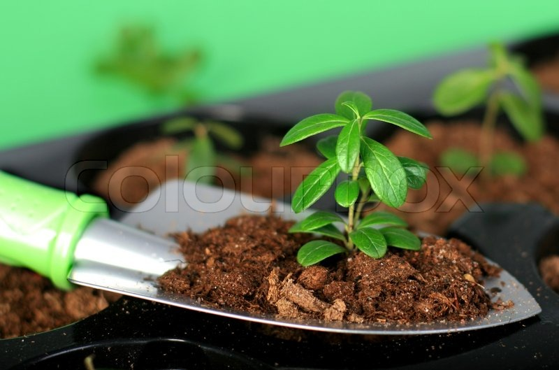 Shovel with soil and plant stock photo colourbox for Preparation of soil wikipedia