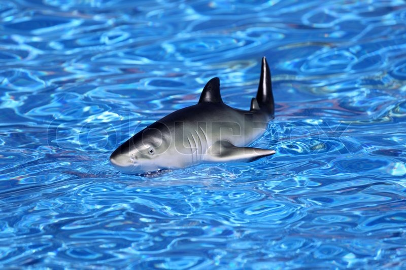 Shark Toy Box : Toy shark in swimming pool stock photo colourbox