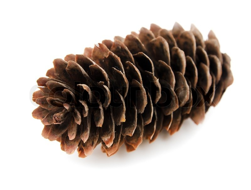 Spruce Pine Cone On White Background Stock Photo Colourbox