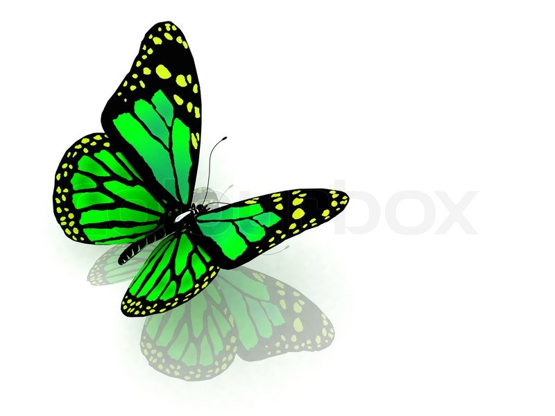 Butterfly Property Management