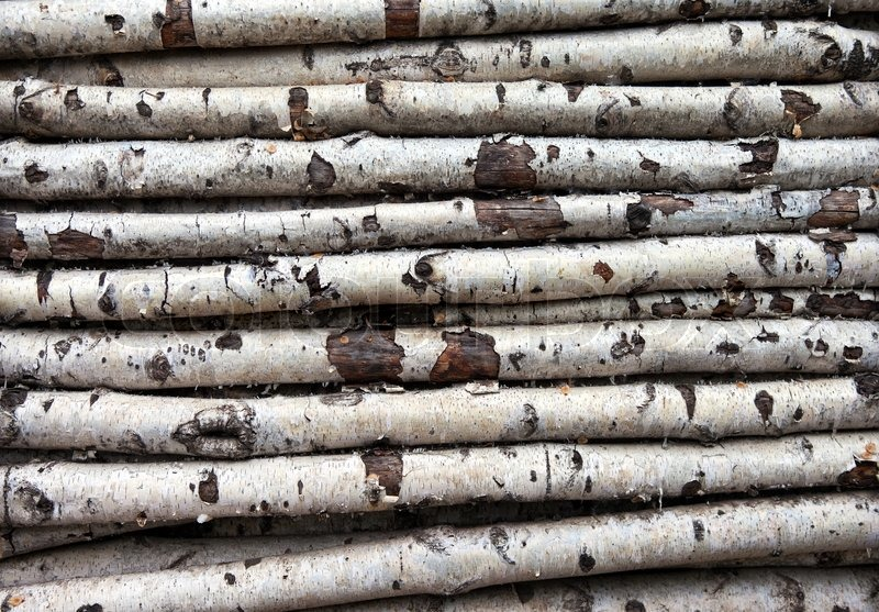 Birch Wood Logs ~ Background of the old birch logs stock photo colourbox