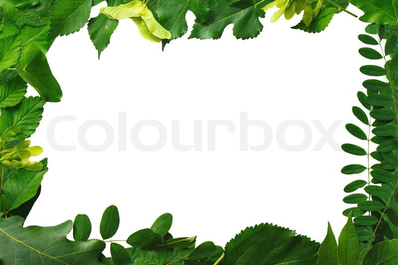 frame is made of natural green leaves stock photo colourbox - Natural Frame