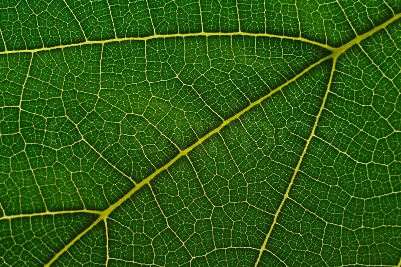 Natural Background Texture Of Green Leaf Stock Photo Colourbox