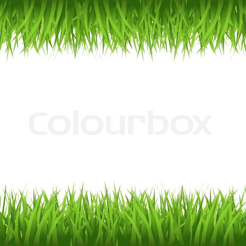 Grass border stock photo colourbox for Best grasses for borders