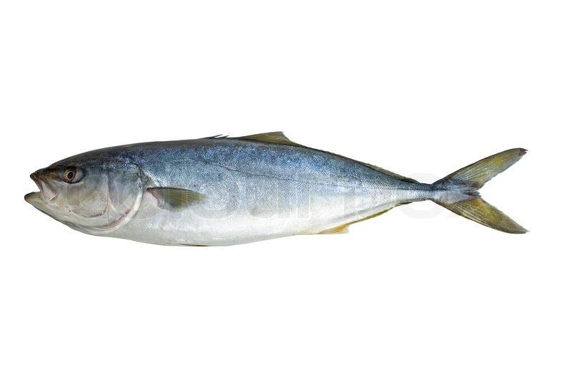 Single tuna fish stock photo colourbox for Is tuna fish healthy