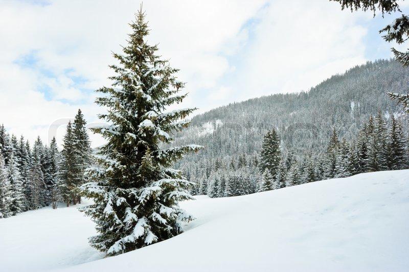 Outdoor Walkway Christmas Trees