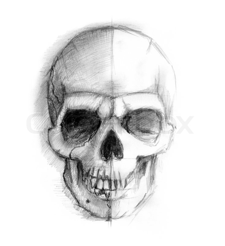 stock image of drawing human skull