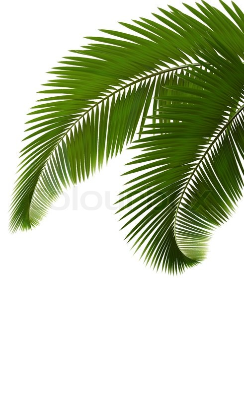 Palm Leaves On White Background Stock Vector Colourbox Vector illustration of realistic tropical shadow overlay effect. palm leaves on white background